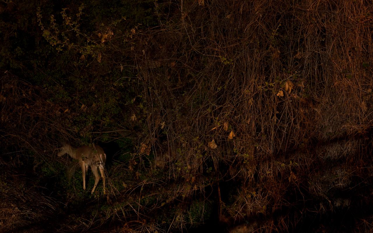 Five Deer © 2013 James Sinks